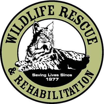 The logo for the organization is based off of the founding rescue of a local bobcat.  www.wildlife-rescue.org