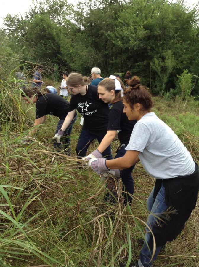 Jessica Hess, Kyrie Bouressa, Josie MacLean, and Jennifer Chaparro pull Johnson Grass. Students learned that this grass is an invasive species.