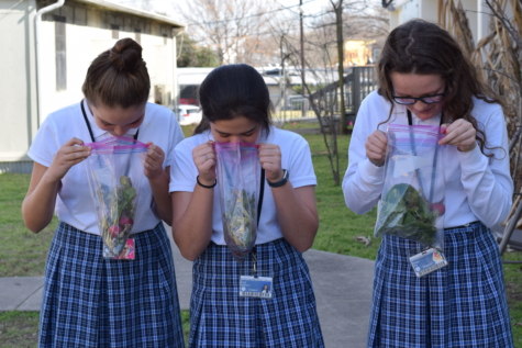 "Ginger Larson (6), Addison Leal (6), and Ella Cop (6) proudly inspect their harvests. The students produced all of these vegetables with their peers and guidance from Ms. Warner. In STARS class, the students learned about the impact that growing your own foods can have on the Earth. ""Gardening makes me feel really good, because I feel like I'm doing something really good for the environment by growing new foods and by not having bad food,"" Leal said."